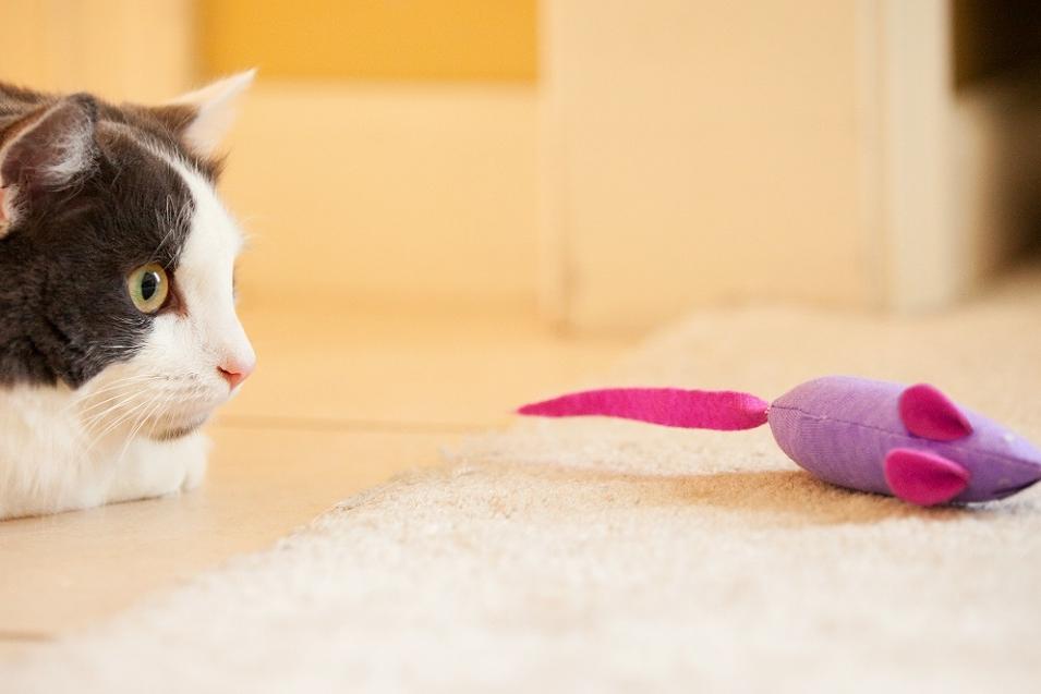 Hét perfecte speeltje voor je kat.