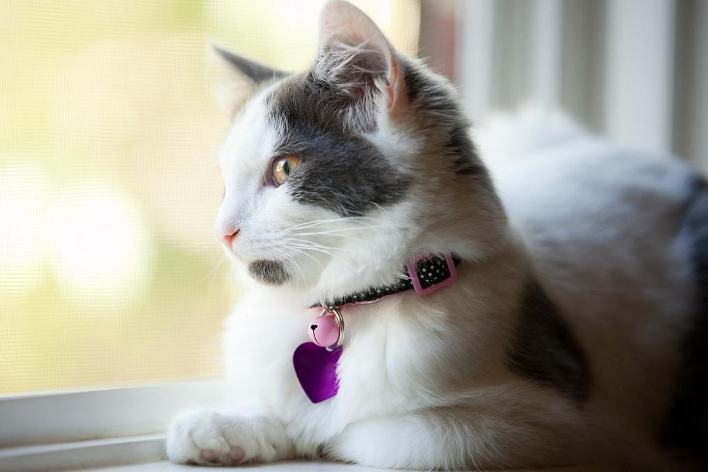 Mist jouw kat je als ze alleen achterblijft?