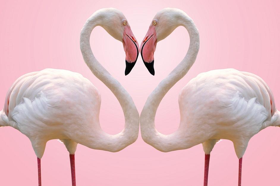 De 12 hartsverlangens voor echte liefde