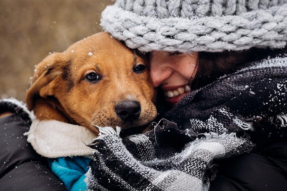 8 vragen die je je best stelt voor je een hond in huis neemt