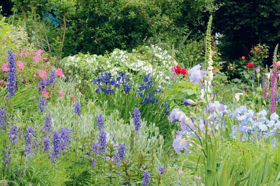 Doe-tip voor je tuin: red de (honing)bij