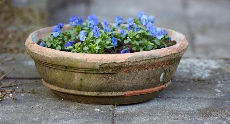 Instant lente in de (moes)tuin